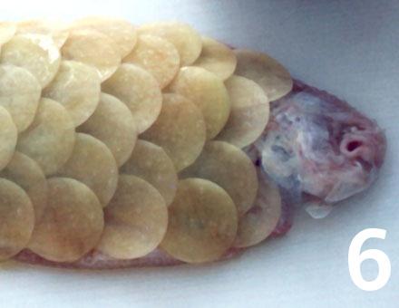 Preparacion de Lenguado relleno y cubierto con escamas de papas - Paso 6