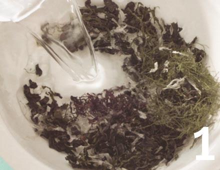 Preparacion de Ensalada de Algas con Espinaca - Paso 1